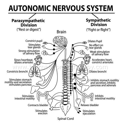 neuralna terapija 1